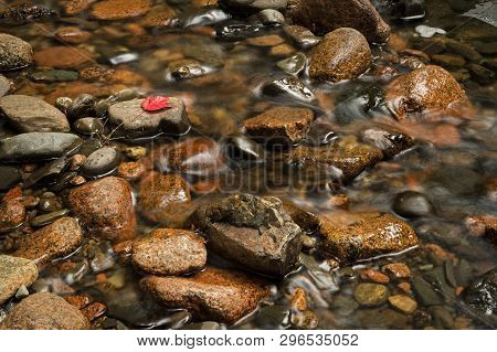 Water Moving In Stream - One Red Leaf - Motion Blurred