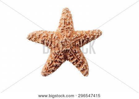 Small Starfish Seastar Isolated On White Background