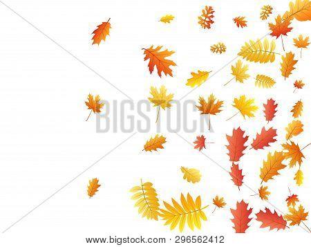 Oak, Maple, Wild Ash Rowan Leaves Vector, Autumn Foliage On White Background. Red Orange Gold Oak Dr