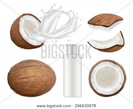 Coconut Collection. Fresh Tropical Coco Fruit With Milk Vector Nature Coconuts Realistic Illustratio