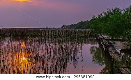 Tranquility Landscape Panoramic View. Beautiful Sunset In Peaceful Scene With  Small Mangrove Planti
