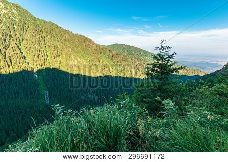 Coniferous Trees On The Rocky Slope. Wonderful Nature Scenery Of Fagaras Mountains On Summer Morning