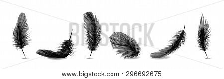 Vector 3D Realistic Different Falling Black Fluffy Twirled Feather Set Closeup Isolated On White Bac