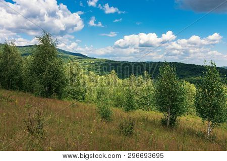 Young Forest On The Grassy Hill. Wonderful Summer Weather With Cloudy Sky. Beautiful Nature Scenery