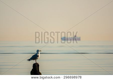 A Seagull Sitting On A Pole On The Beach Of The Baltic Sea