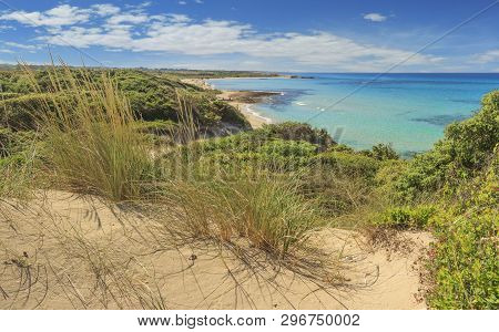 Summer Beach.torre Guaceto Nature Reserve: Panoramic View Of The Coast From The Dunes.italy (apulia)