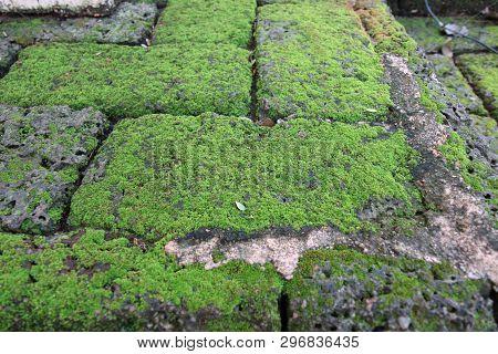 Bright Green Moss On A Gray Brick Wall. Background Brick Wall And Moss Texture. Moss Background. Ima