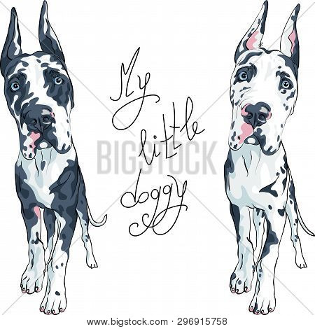 Vector Spotted Dog Harlequin Great Dane Puppy With Cropped Ears