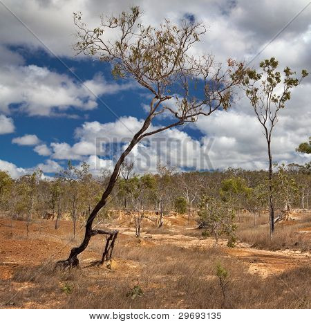 walking tree soil erosion due to overgrazing leading to desertification caused by overexploitation