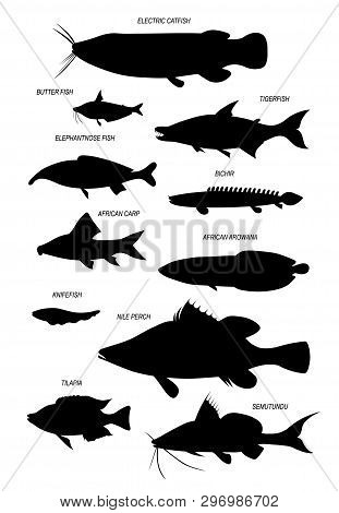 Freshwater Fish Of Africa, River Nile (nile Tilapia, African Carp, African Arowana, Tiger Fish, Butt