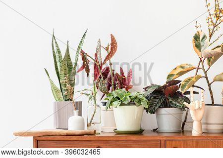 Houseplants on a wooden cabinet