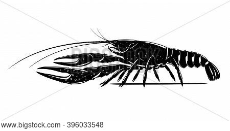 Realistic Red Swamp Crayfish Black And White Isolated Illustration, One Big Freshwater North America