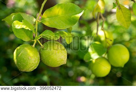 Two Faulty Lemons With Skin Marks Against Blurred Background