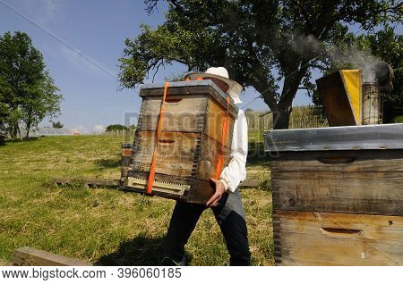 Beekeeper At Work At The Beehive