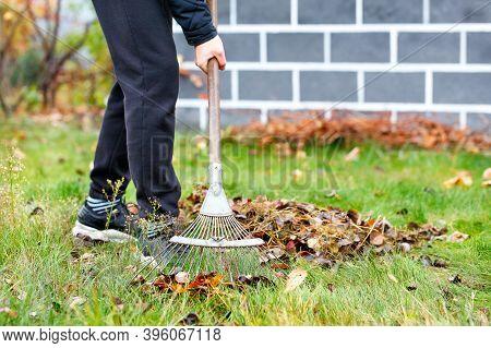 A Young Gardener Tends A Green Lawn By Raking Fallen Leaves In An Autumn Garden.