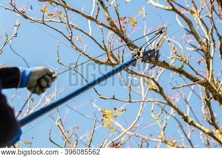 Gardener using telescopic pruning shears for garden maintenance in Autumn