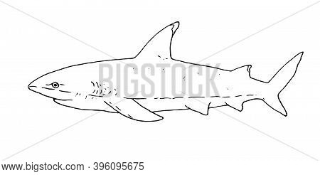 Black Outline Of A Shark Vector Drawing. Shark Eater. Sketch Of The Side View Of A Shark Fish. Vecto