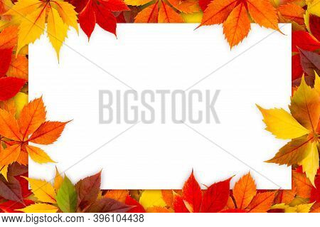 Blank Card Surrounded By Colorful Autumn Leaves.
