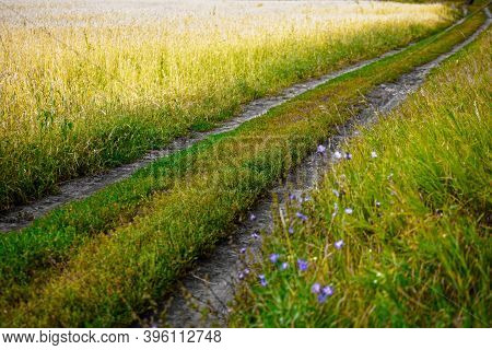 Field Country Road On A Wheat Or Rye Field Goes Into The Distance. Colorful Landscape On A Warm Summ