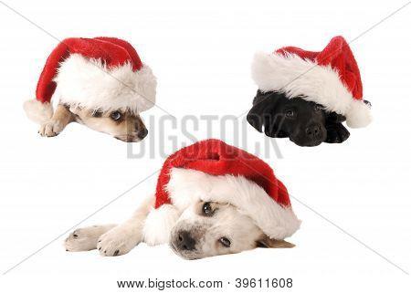 Santa Hat Christmas Puppies