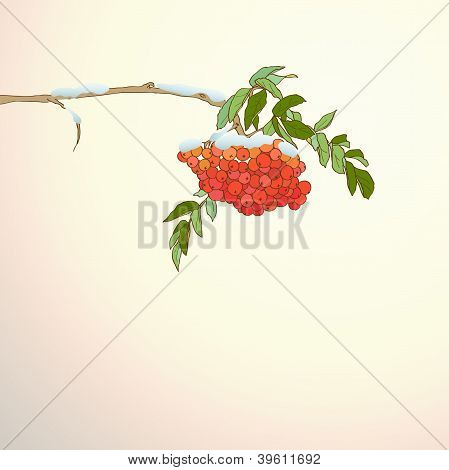Background With Rowan Branch
