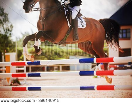 A Bay Racehorse With A Long Tail And A Rider In The Saddle Quickly Jumps The High Barrier In A Show