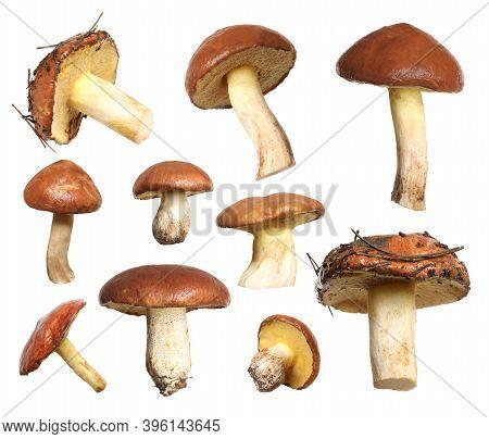 Set Of Fresh Slippery Jack Mushrooms On White Background