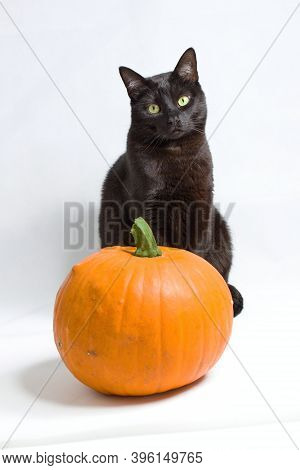 Halloween Concept - Black Cat Sitting Behind A Pumpkin, Autumn Is Here.a Black Cat With Green Eyes S