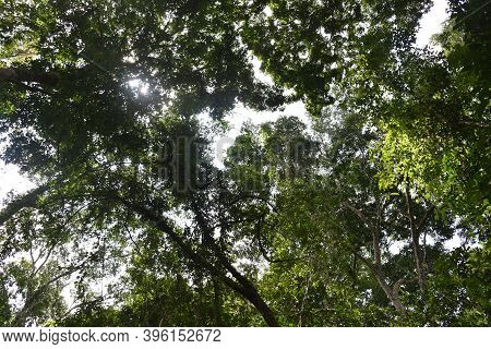 Photos Of The Tropical Rainforest On A Hot Sunny Day In Summer.tropical Evergreen Forest Or Rain For