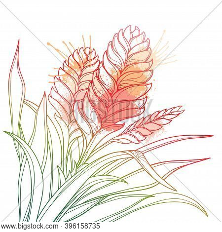 Vector Corner Bouquet Of Outline Tropical Vriesea Plant With Flower And Leaf In Pastel Pink Isolated