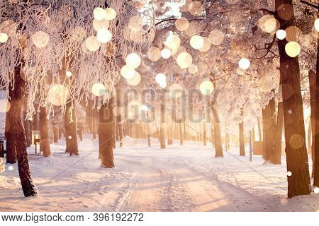 Magic Christmas Light In Winter Forest. Sunny Bokeh On White Trees Background. Colorful Vibrant Snow