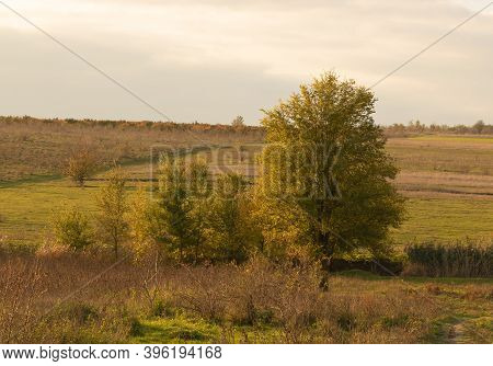 A Few Elm Trees In The Nature Landscape, Autumn Time