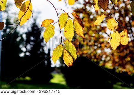 Autumn scene. Fall. Trees and leaves in sun ligh