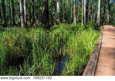 Wooden Boardwalk Trail By Marsh Grass Water