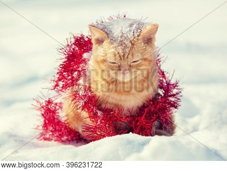 Little Kitten Wrapped In Serpentine, Sitting Outdoors On The Snow In Winter.