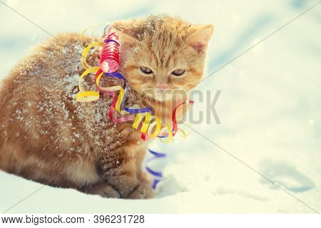Little Kitten Wrapped In Serpentine, Sitting Outdoors On The Snow In Winter