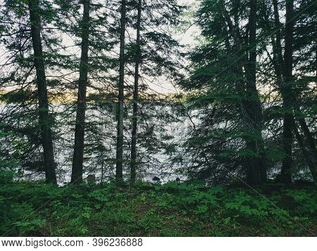 A View Of Trees In Silhouette On The Child's Lake Hiking Trail At Duck Mountain Provincial Park, Man