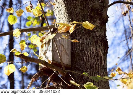 Wooden Bird House On A Tree. Autumn Nature Background. Bottom View Of A Tree Trunk With A Birdhouse.