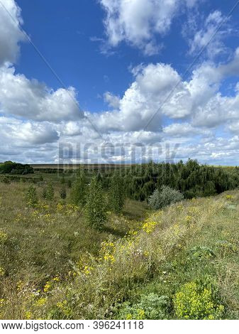 Wildlife Background. Gaze At The Horizon In An Open Area. Landscape Blue Sky With White Clouds And G