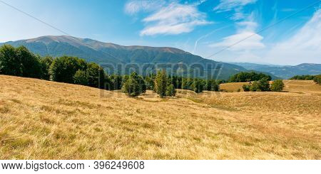 Yellow Grass On The Meadow In Mountains. Beautiful Nature Landscape Beneath A Blue Sky With Fluffy C