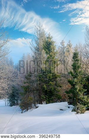 Spruce Forest On A Misty Morning. Beautiful Landscape In Winter. Misty Weather With Bright Sky. Hill