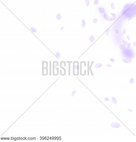 Violet Flower Petals Falling Down. Vibrant Romantic Flowers Corner. Flying Petal On White Square Bac