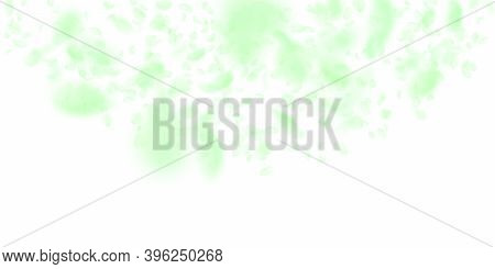 Green Flower Petals Falling Down. Elegant Romantic Flowers Semicircle. Flying Petal On White Wide Ba