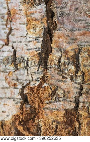Macrophotography Of Natural Wooden Surface Texture Close Up View.