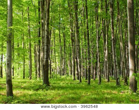 June Forest