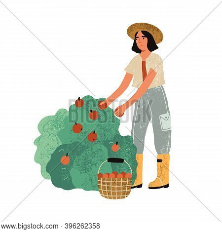 Female Farmer In Uniform Picking Fruits From Bushes In The Garden. Harvest Gathering Time. Woman Wor