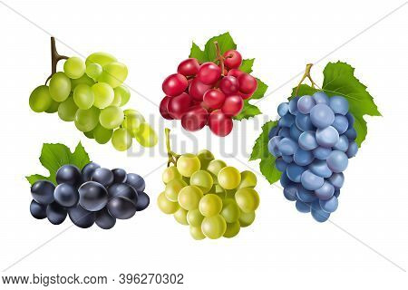 Realistic Grapes Set. Collection Of Realism Style Drawn 3d Miscellaneous Branches Of Green Blue Tabl