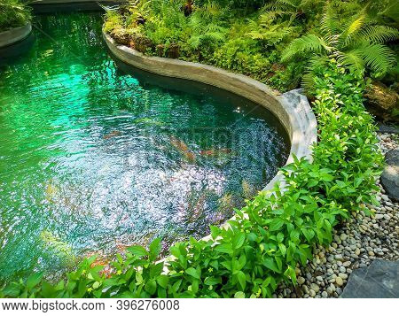 A Pond In Garden, Greenery Fern Epiphyte Plant, Tropical Shrub And Bush Under Shading Of The Trees,