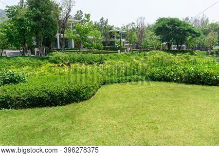Fresh Green Grass Smooth Lawn As A Carpet With Curve Form Of Bush, Trees On The Background, Good Mai