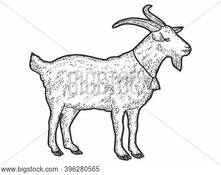 Goat With Bell Around Its Neck. Engraving Vector Illustration. Sketch Scratch.